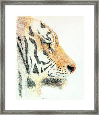 Framed Print featuring the drawing Tiger's Head by Stephanie Grant