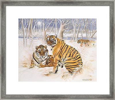 Tigers In The Snow, 2005 Acrylic On Canvas Framed Print