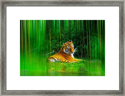 Tigers Misty Lair Framed Print