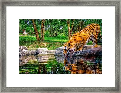 Tigers Pond Framed Print by Glenn Feron