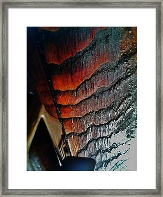 Tigerwood Framed Print by Jaime Neo