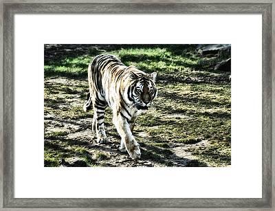 Tigger Framed Print by Bill Cannon