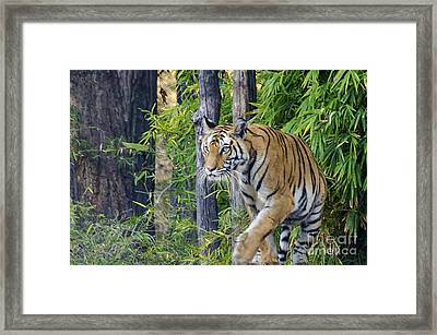 Tiger International Day Framed Print