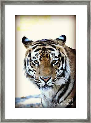 Tigris Framed Print by Mindy Bench
