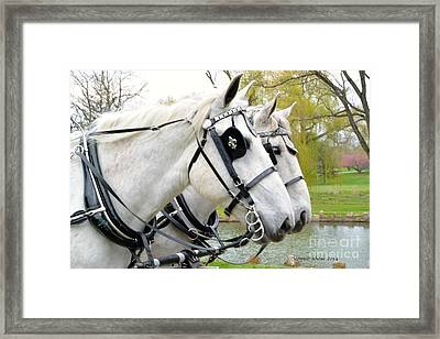 Tillie And Bruce #2 Framed Print by Jeannie Rhode