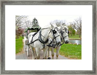 Tillie And Bruce Framed Print by Jeannie Rhode