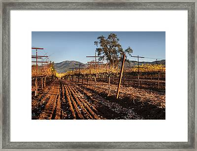 Tilling The Vineyards Framed Print by Kent Sorensen