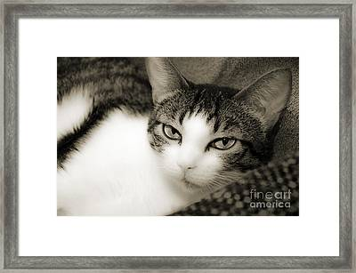 Tilly Little Miss Attitude Framed Print by Andee Design