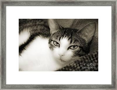 Tilly Little Miss Attitude Framed Print