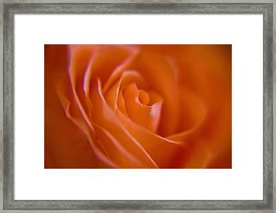 Tilted Rose Framed Print by Kim Lagerhem