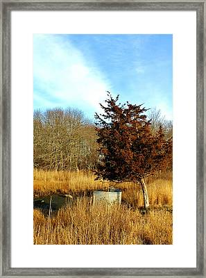 Tilted Tree  Framed Print