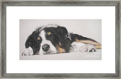 Tim Framed Print by Joanne Simpson