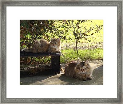 Timber And Cougar Framed Print