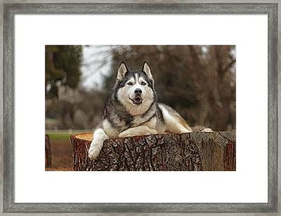 Timber Framed Print by Brian Cross