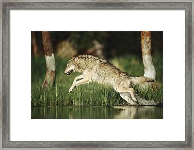 Timber Running Through Water Framed Print