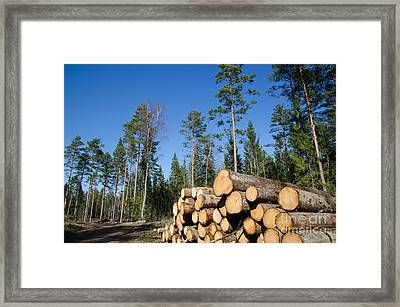 Timber Stack Of Whitewood Framed Print