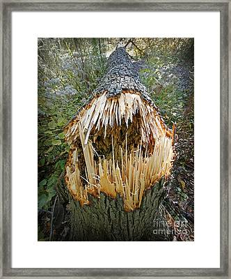 Timber Teeth Framed Print