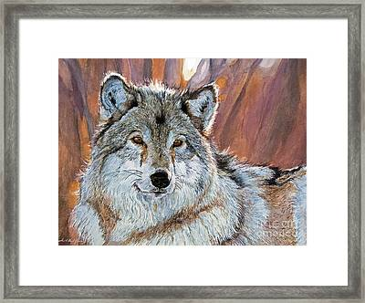 Timber Wolf Framed Print by David Lloyd Glover