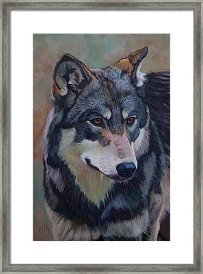 Timber Wolf _motomo Framed Print