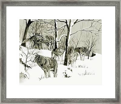 Timber Wolf Pack Framed Print