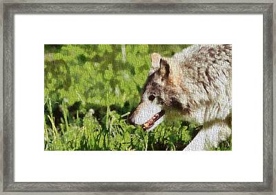 Timber Wolf Portrait On Canvas Framed Print by Dan Sproul