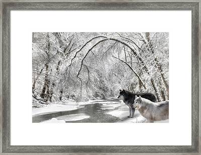Timber Wolves Framed Print by Lori Deiter