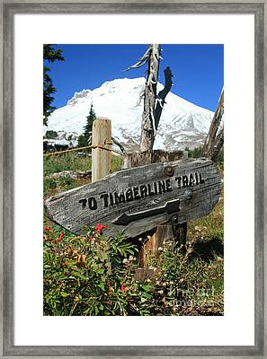 Timberline Trail Framed Print by Cari Gesch