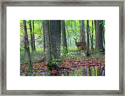 Framed Print featuring the photograph Time Alone With God by Lorna Rogers Photography