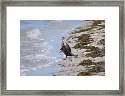 Time For A Bath Framed Print by Bill Cannon