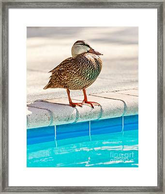 Time For A Dip II Framed Print by Michelle Wiarda
