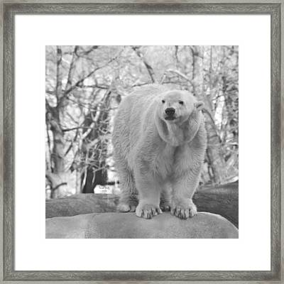 Time For A Dip Framed Print by Trish Tritz