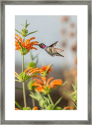 Time For A Drink Framed Print