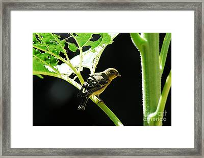 Time For Lunch Framed Print by Laurianna Taylor