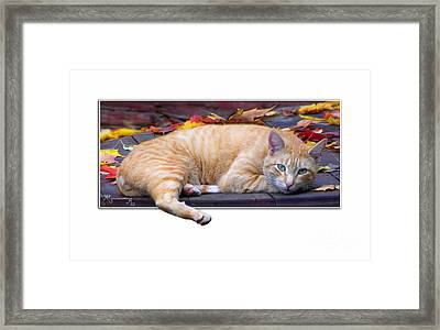Time For Lunch Yet? Framed Print by Mariarosa Rockefeller