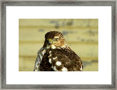 Time For My Close-up Framed Print by Kimberly Mackowski