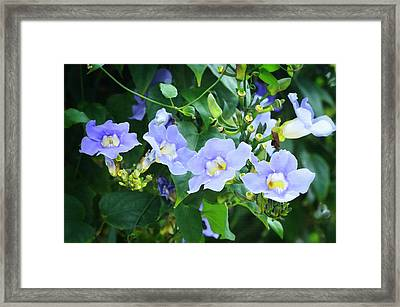 Time For Spring - Floral Art By Sharon Cummings Framed Print