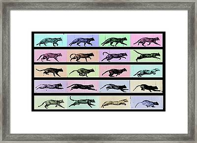 Time Lapse Motion Study Cat Black And Color  Framed Print by Tony Rubino