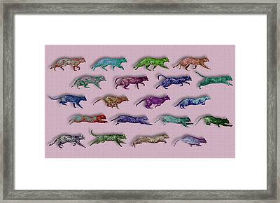 Time Lapse Motion Study Cat Pink Background  Framed Print by Tony Rubino