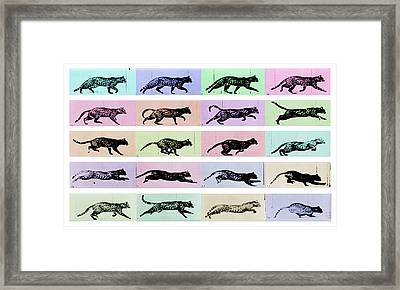 Time Lapse Motion Study Cat White And Color  Framed Print by Tony Rubino