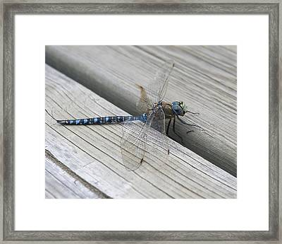Framed Print featuring the photograph Time Out by Rhonda McDougall
