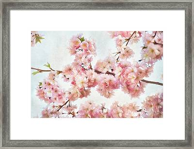 Time To Bloom Framed Print by Gynt
