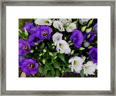 Time To Bloom Framed Print