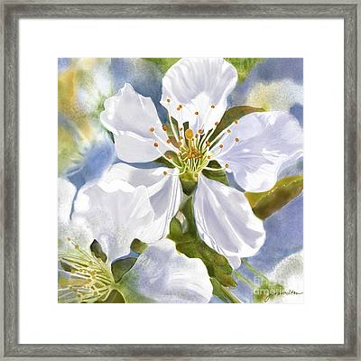 Time To Blossom Framed Print by Joan A Hamilton