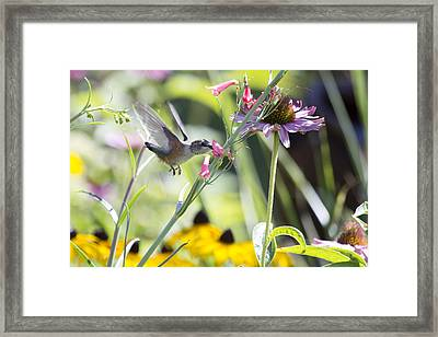 Time To Fly Framed Print by Dana Moyer