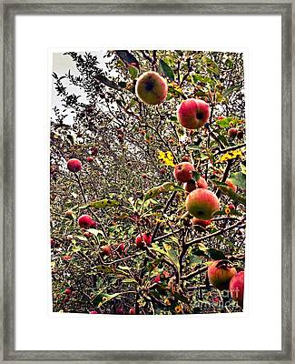 Time To Pick The Apples Framed Print