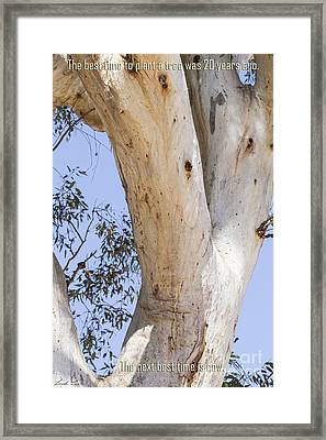 Time To Plant A Tree Framed Print by Linda Lees