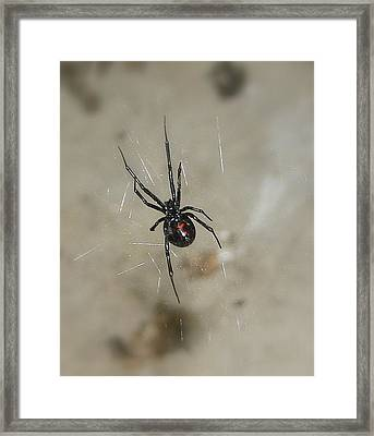 Framed Print featuring the photograph Time To Wait by Marie Neder