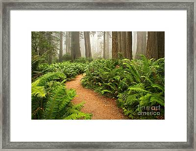 Timeless Framed Print by Alice Cahill