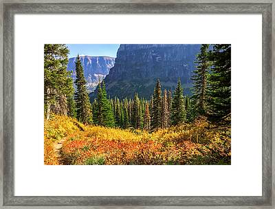 Timeless Colors Of Nature Framed Print by Rohit Nair