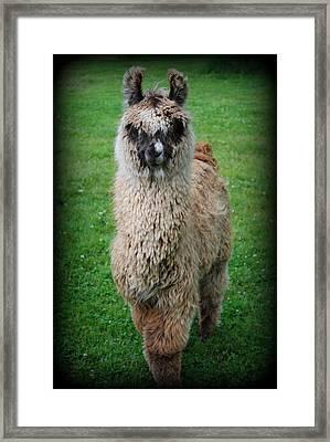 Timmy Framed Print by Kathy Sampson